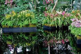 garden bytes from the big apple spectacular orchid show nybg
