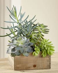 Succulent Plant The New Darling In Plant Decorating Succulents For Style Blooms