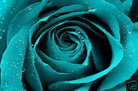 turquoise roses turquoise roses flowers petals garlands mince his words