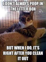 Dos Equis Man Meme Generator - cute memes generate a meme using the most interesting cat in the