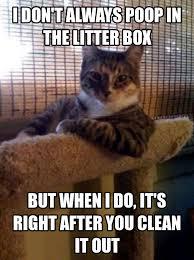 Generate Memes - cute memes generate a meme using the most interesting cat in the