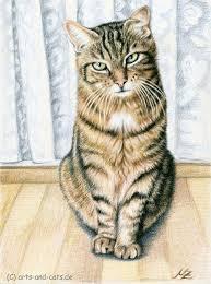 cat animal drawing nicolezeug 16