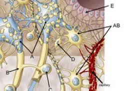 Sheep Heart Anatomy Quiz Kidney Labeling Anatomy Corner