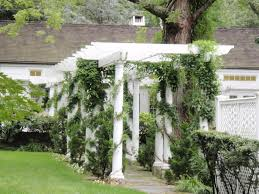 divine garden design and decoration with various climbing vines
