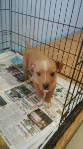 Overstock Com Pets 174 Best Animal Up For Adoption Images On Pinterest Adoption