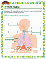 breathe deeply 7th grade science worksheet of dragons