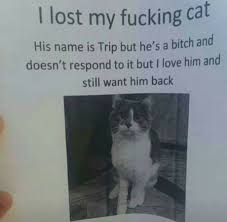 Missing Cat Meme - lost cat meme by dangerouspizza memedroid