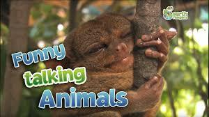 funny talking animals youtube
