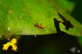 ants formicidae types of ants facts life cycle do my own