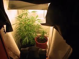 chambre de culture chambre de culture cannabis complete plansmodernes tente de culture