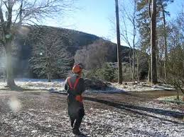 felling a scots pine tree in the scottish borders february 2017