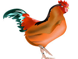 dreaded bird flu reported in ahmedabad ahmedabad news times of