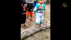 film ular phyton heboh penangkapan ular phyton 8 meter oleh warga youtube