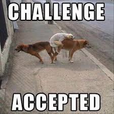 Challenge Accepted Meme - 35 challenge accepted memes that will inspire you to greatness