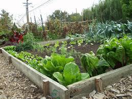 art small interior vegetable garden
