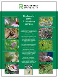 ru u0027s schaumburg campus now a certified wildlife habitat by the