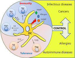 sensors free full text dendritic cells as danger recognizing