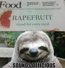 Funny Sloths Memes - molester sloth google search haha pinterest sloth sloth