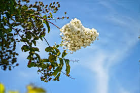 florida tree flower quiz days in the of a consulting arborist