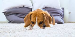 6 best flooring options for pet owners