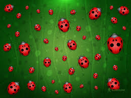ladybug wallpaper wallpapers browse