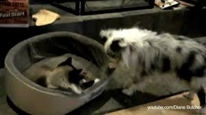 Cats In Dog Beds Animal Loving Couple Builds A Giant Bed To Accommodate Five Cats