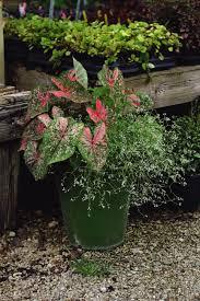 container gardening in the summer heat esposito garden center blog