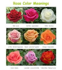 roses colors color meanings banner flower house