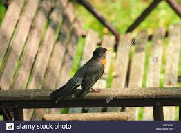 Lawn Swing Robin Perched On Lawn Swing Stock Photo Royalty Free Image
