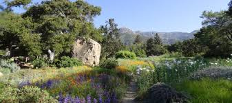 Botanic Garden Santa Barbara Sixth Annual Santa Barbara Botanic Garden Conservation Symposium