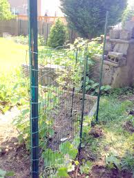 diy easy garden trellis for squash and cucumbers adventures in life
