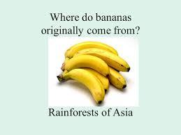where do bananas originally come from rainforests of asia ppt