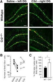 complement receptor 2 is expressed in neural progenitor cells and