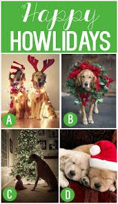 christmas card picture ideas with dogs all ideas about christmas