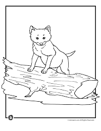 baby wolf coloring pages woo jr kids activities