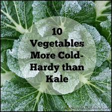 winter garden vegetables gardening ideas