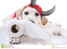 toilet paper halloween toilet paper dog royalty free stock images image 33294409