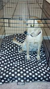 Cheapest Beds Online India Best 25 Cheap Dog Cages Ideas On Pinterest Cheap Puppies Pet
