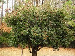 Best Trees For Backyard by The Best Trees For Any Backyard Dogwood Landscaping