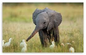 apple wallpaper elephant elephant 4k hd desktop wallpaper for 4k ultra hd tv tablet
