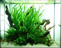 Tank Aquascape Aquascaping Tall Square Tanks Tropical Fish Forums