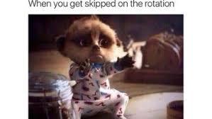 Stoned Dogs Meme - stoned animals weed memes