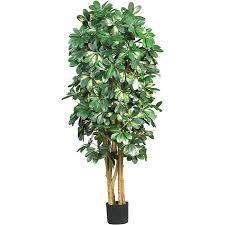 silk schefflera 5 foot tree free shipping today overstock