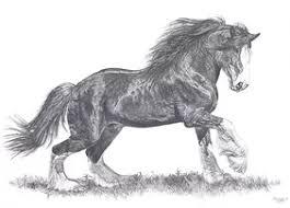 animal prints sale fine art horse u0026 prints uk animal artist
