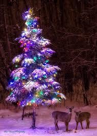 Outdoor Christmas Deer With Lights Best 25 Outdoor Christmas Trees Ideas On Pinterest Outdoor