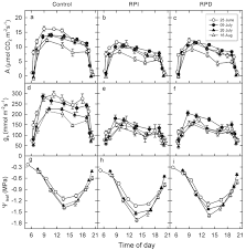 physiological changes in plant hydraulics induced by partial root