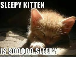 Sleepy Cat Meme - 20 best sleepy memes sayingimages com