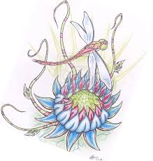 lotus dragonfly tattoo drawing real photo pictures images and