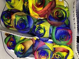 tie dye roses tie dye roses pics