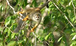 Tropical Dry Forest Animals And Plants - amazon places wwf